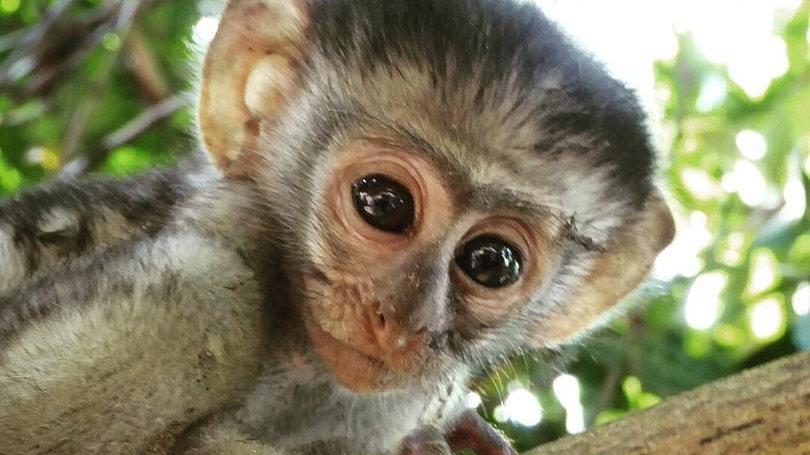 Nkima (Monkey) Clan