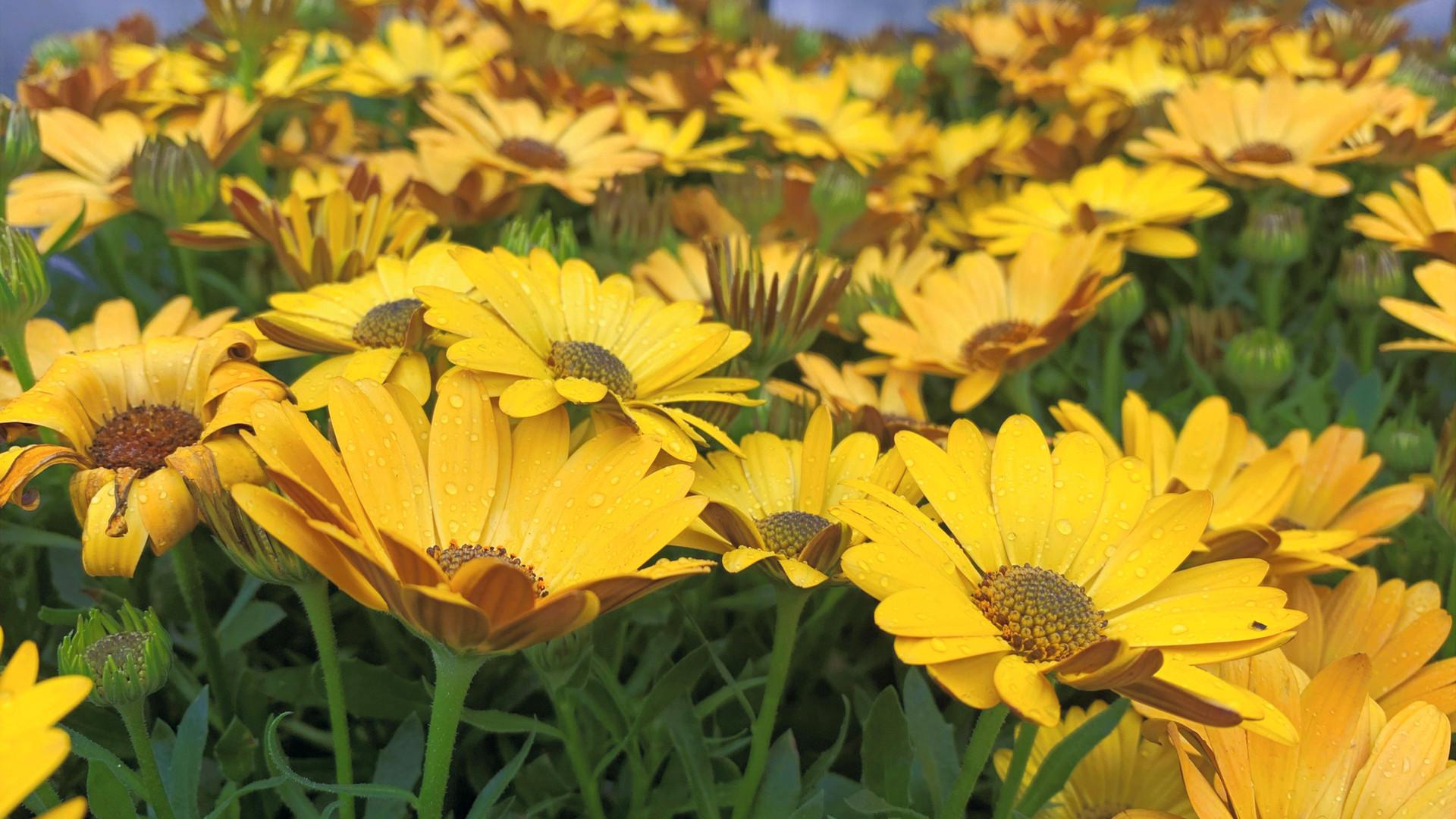 flowers_edited_edited_edited_edited.jpg