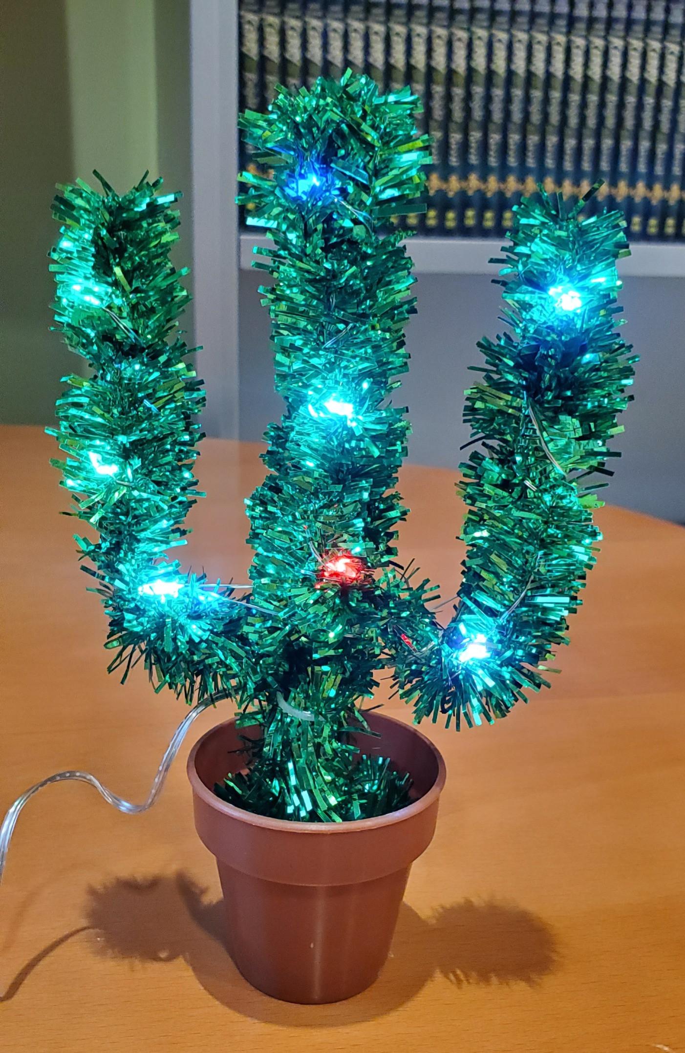 Holiday Cactus