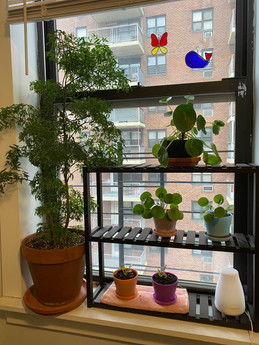 Working From Home houseplant update!