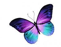 sticker-papillon-violet-et-bleu.jpg