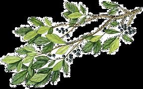 huckleberry twig_edited_edited_edited.pn