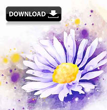 beautiful-watercolor-daisy-flower-backgr