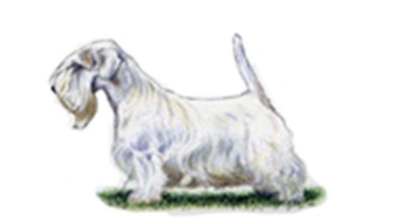 Sealyham Terrier Breed Standard