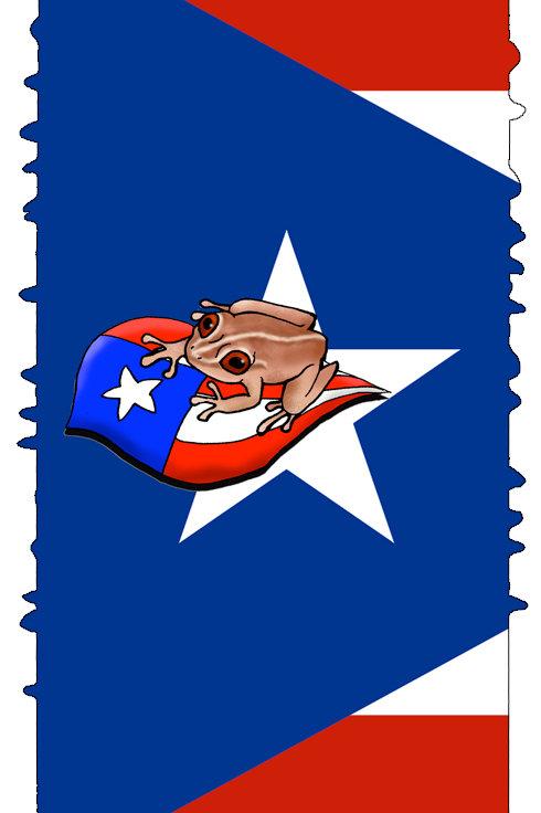 Puerto Rico Cocqui 2