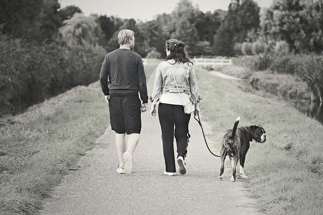 我願意與你過著平凡的生活,一起手牽手遛狗。