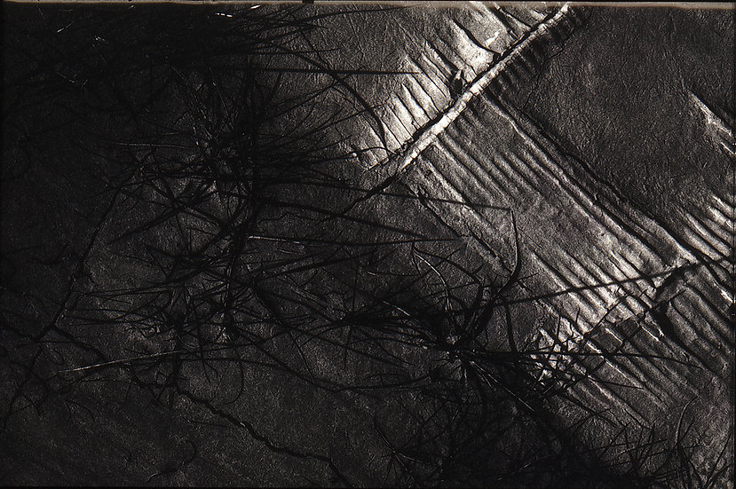 "Earth ""Contemporaneous Fossils""3"