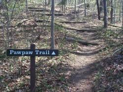 Pawpaw Trail