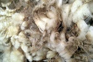 sheared wool.jpg