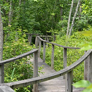 pumpkin-ash-trail-boardwalk-275x275.jpg