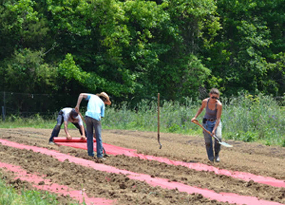 The farm crew preps the fields for planting by laying plastic which helps to maintain soil moisture and temperature, while managing weed control.