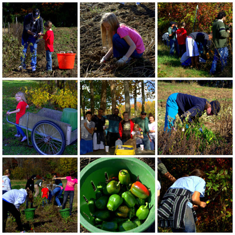Volunteers fix fence lines and glean the Ecosystem Farm fields on November 2 during Service Saturday