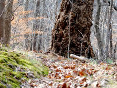 Trail Treks: The Beauty of Nature Abounds Even in Winter