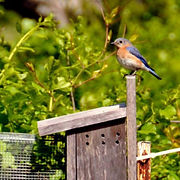 bluebird-trail-box-275x275.jpg