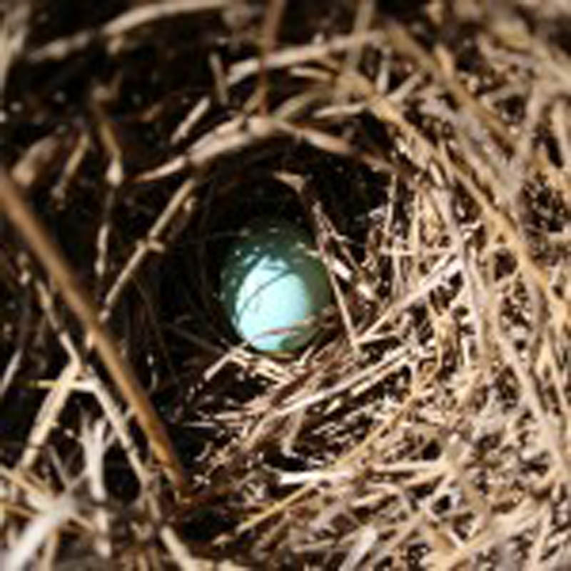 The first bluebird egg of the season, spotted on the Ken Otis Bluebird Trail.