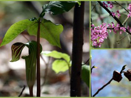 Trail Treks: Birds and Blooms in Piscataway Park