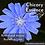 Thumbnail: Chicory flower essence