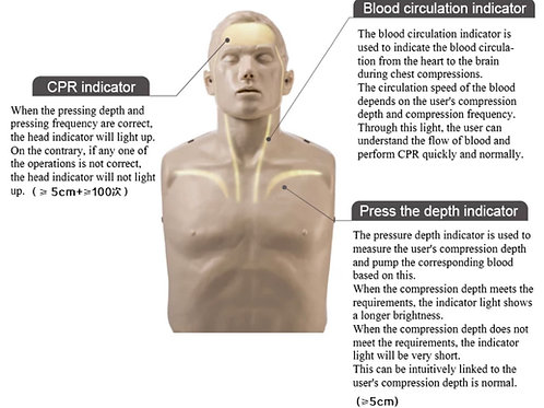 Blood visualization cardiopulmonary resuscitation simulator/mannequi/CPR model
