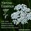 Thumbnail: Yarrow flower essence