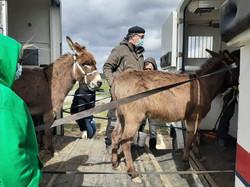 Sauvetage de Bambi, Irène et Charly