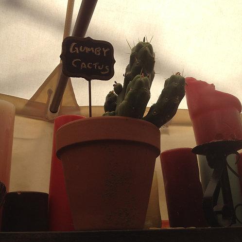 Gumby cactus