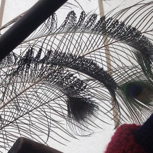 Asian phoenix feather