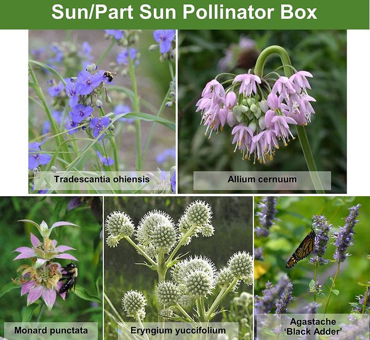 210303-pollinator-box-sun-part-sun-garde