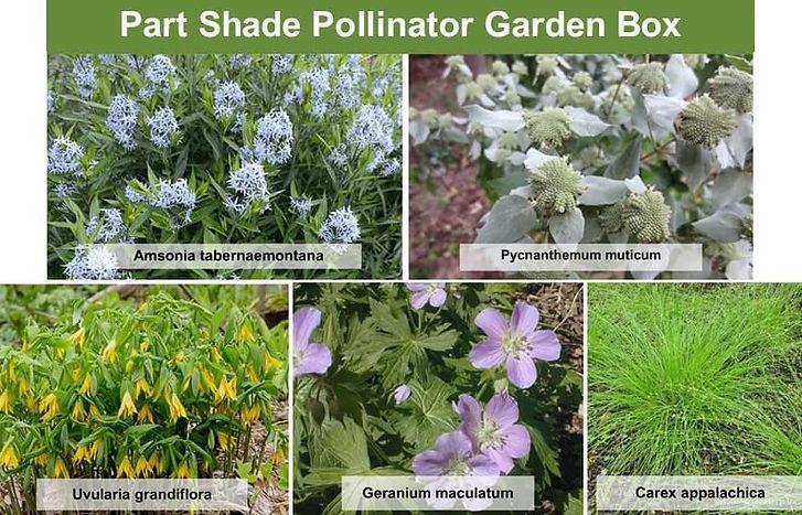 Pollinator-part-shade-F.jpg