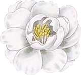 flower05_edited.png