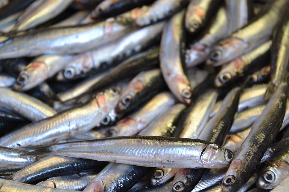 Entierro de la sardina Spagna sepoltura