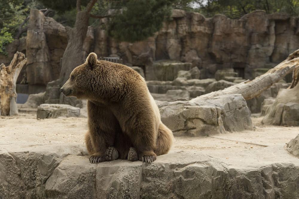 orso e corbezzolo madrid