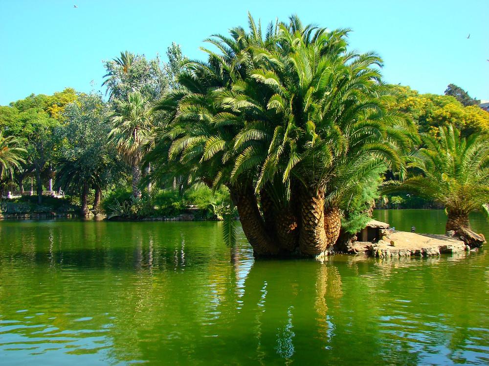 Barcellona parchi e palme