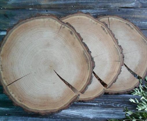 Wood Round Slice