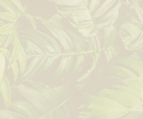 background-5_2x.jpg