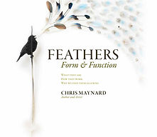 feathers-form-and-function-by-chris-mayn