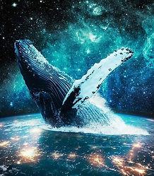 whale dynamic.JPG