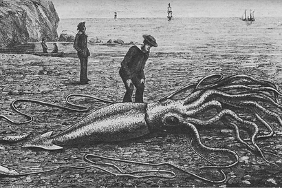 800px-Giant_squid_catalina2-min.png