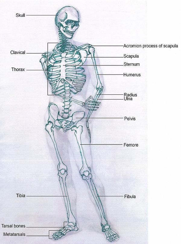 Skeleton-Front.jpg