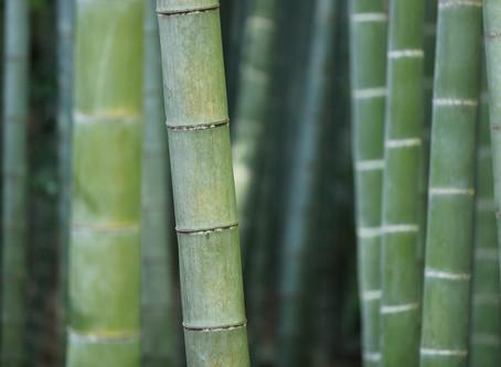 Bamboo flooring material