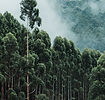 Árvores altas