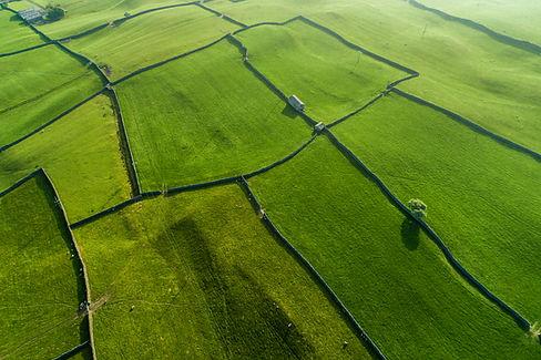 Grüne Weiden
