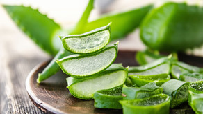 The Wonder Plant: Aloe Vera Benefits