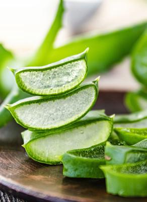 Benefits of Aloe Barbadensis
