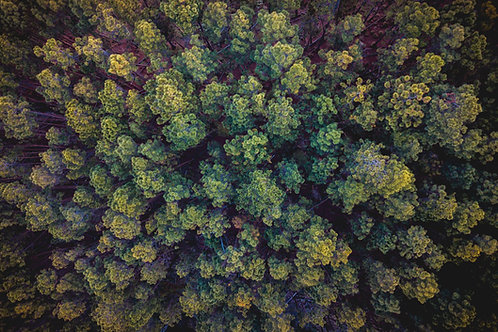 50 Trees per Month - Offset 10 Tons of Carbon Every Month