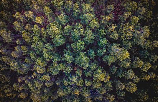 Naturmeditation - sich mit der Natur verbinden und eins werden