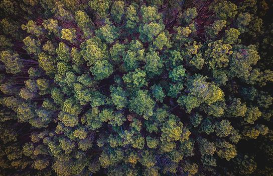 Vista aérea das árvores