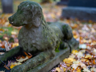 What Happens to my Pet if I Die?