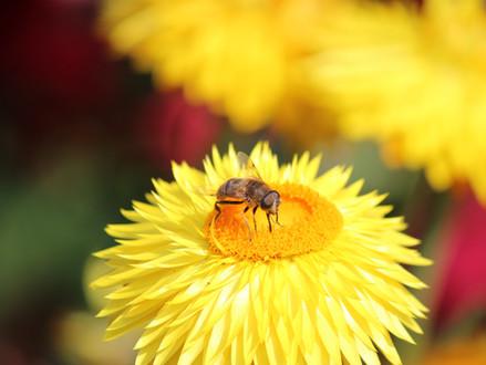 Acht manieren waarop de Start-Up Nation de bijen probeert te redden