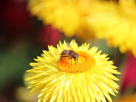 Schwerer Vorwurf: Deutschland missachte europäische Bienenschutzvorgaben