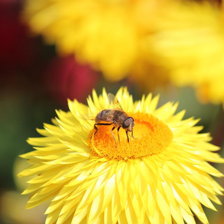 Air Bee N Bee